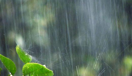 その憂鬱はあなただけじゃない!雨の日ならではの楽しみ方を見付けよう