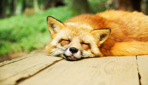寝ても寝ても眠い?その眠り過ぎは「ストレス」が原因かも?「過眠」について知ろう